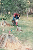 spruce buddy.jpg