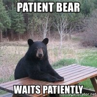 patient-bear-waits-patiently.jpg