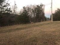 deer cheaha.jpg