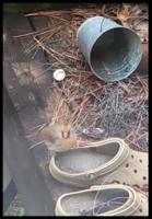bird pic.PNG
