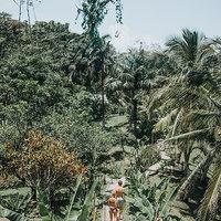 Jungle Panama.jpeg