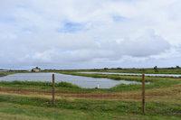 Shrimp ponds.jpg