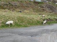 2019-06-11  Honningsvag, Norway 5_1560281784422_8.JPG