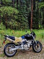 moto forest.jpg
