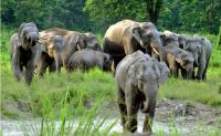 Elephants Jan 8 Screen Shot 2020-01-08 at 9.20.06 PM.png
