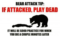 Bear attack pic.jpg