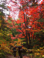 redfoliage.png