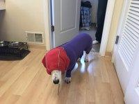 silly dog 004.JPG