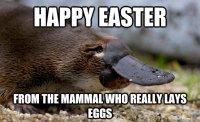 Funny-Easter-Memes-1.jpg