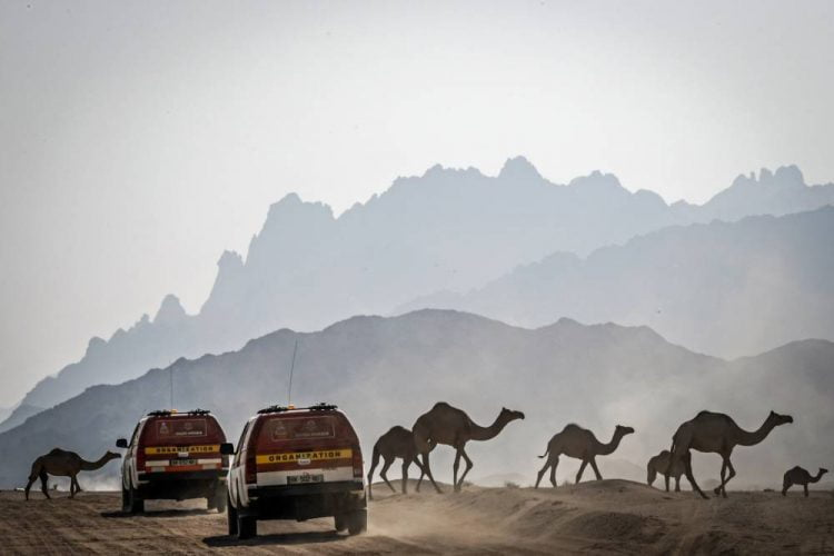 Rally Dakar 2020: Where to Watch