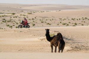 Dakar 2020 Stage 10: Honda Still Ahead