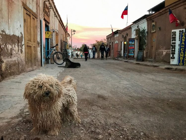 A little ragamuffin dog looks on as another epic sunset takes place in San Pedro de Atacama. -Janelle Kaz