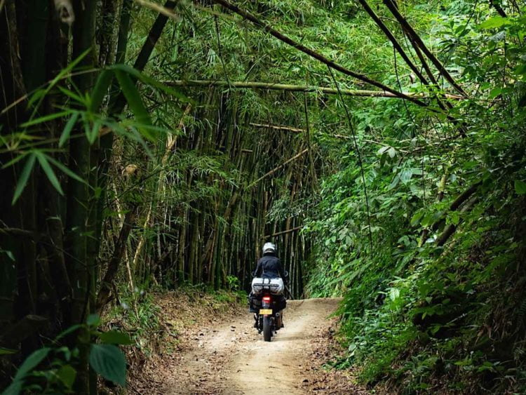 Bamboo tunnels beyond Minca, known as the heart of the world. -Janelle Kaz