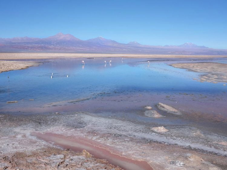 Wild flamingos in the serenity of the very salty Laguna Chaxa. -Janelle Kaz